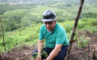 Primeros frutos del convenio de reforestación con la minería artesanal