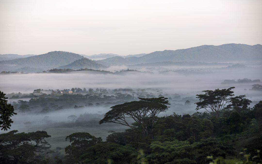 Año verde:  Gran inversión para conservar los recursos naturales