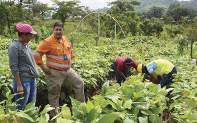 HEMCO apoya plan cacao