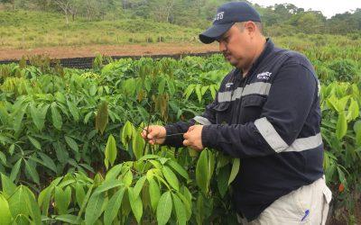 Plan de desarrollo forestal en Bonanza